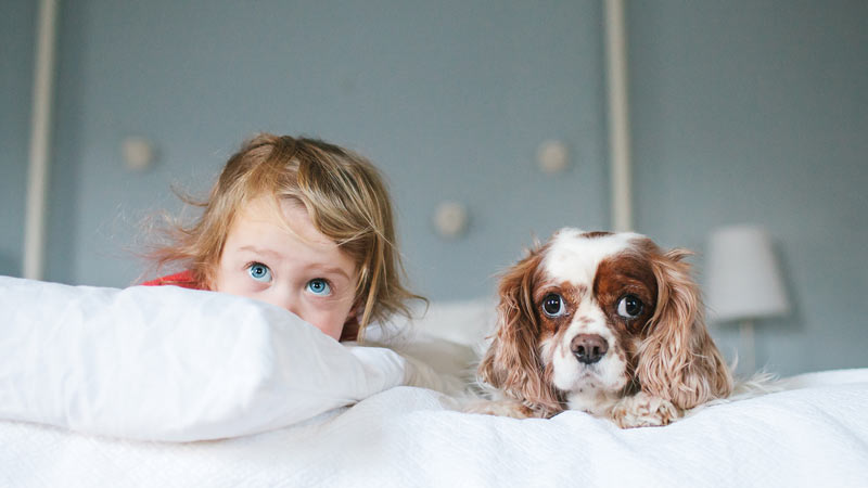 Child and dog on bed